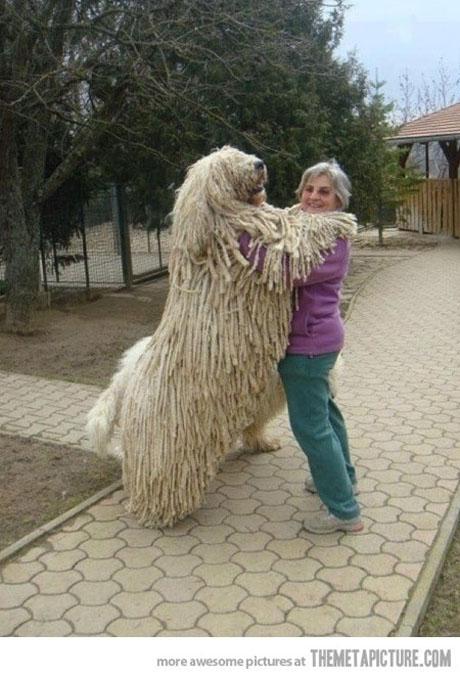 dog10