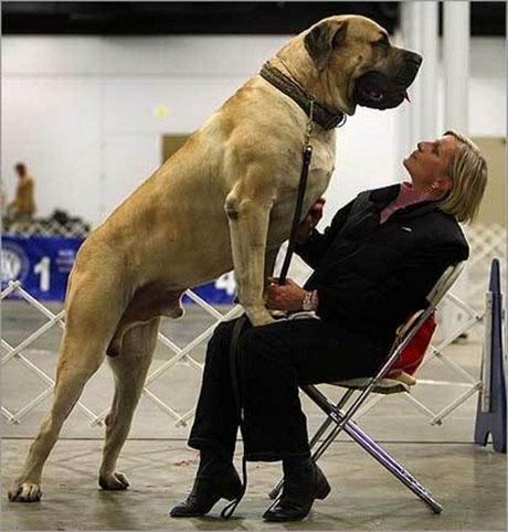 dog14