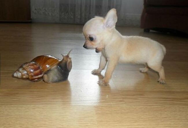 dogsnail