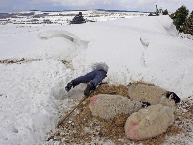 SheepPrank
